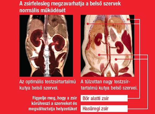 csípőízületi súlycsökkenés)